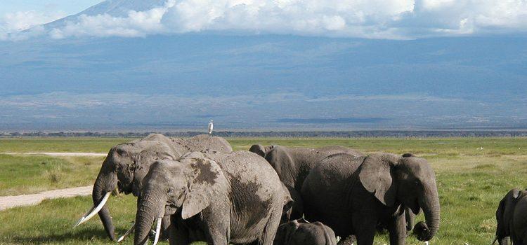 Aventure en Afrique : découvrir les plus beaux coins du Kenya